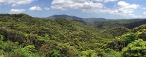 世界的に貴重な照葉樹の森が広がる奄美大島