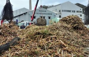 富国製糖への搬入が始まった2018年産の原料サトウキビ=9日、奄美市笠利町