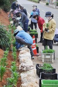 県道沿いの石垣花壇にテッポウユリを植え付けるボランティア=20日、和泊町国頭