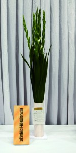 荒田さん(和泊町)に県議長賞 沖永良部から特別賞3点 県フラワーコンテスト