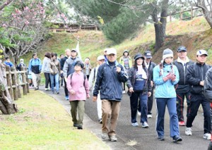 奄美トレイルの徳之島町コース開通を記念した春らんまん桜ウオーキング=27日、同町徳和瀬
