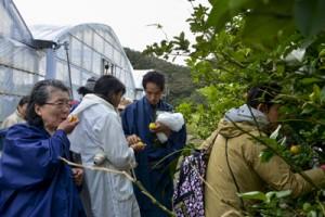 ミカンの味を確かめる参加者と、川島さんが育てている「クサラ」、「コーブシ」(写真下)=26日、瀬戸内町勢里集落