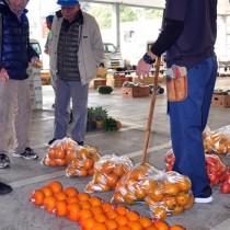 奄美産ポンカンの品薄が続く名瀬中央青果の競り市場=8日、奄美市名瀬