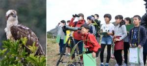 野鳥を観察する龍郷町の児童ら(右)と冬鳥のミサゴ=19日、龍郷町秋名