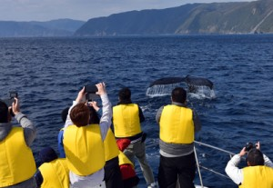 ザトウクジラの観察を楽しむツアー客ら=24日、奄美市名瀬の小湊沖