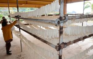 約200本分のダイコンをロープに下げていくメンバーら。早ければ3日で乾燥するという=19日、奄美市名瀬有良