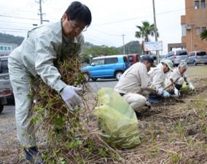 緊急対策外来種のアメリカハマグルマを駆除する龍郷町議会の議員ら=16日、同町浦