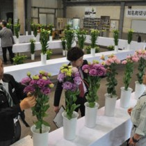 3部門に57点が出品された切り花品評会=20日、知名町