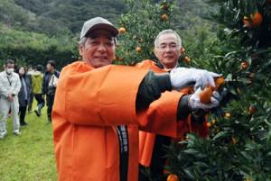 タンカンにはさみを入れ、収穫シーズンを祝う関係者=1日、奄美市住用町