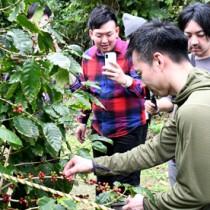コーヒー豆収穫を体験する視察団の一行ら=19日、伊仙町伊仙