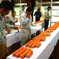 出品タンカンの外観を評価する審査員=14日、奄美市名瀬朝戸の市農業研修センター
