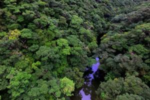 多様な生き物が息づく亜熱帯広葉樹林=奄美大島