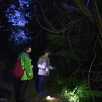 さえずりに耳を済ませる調査員=17日午前6時ごろ、奄美市名瀬の奄美中央林道