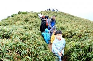 宮古崎のリュウキュウチク群生地を歩く参加者=10日、大和村