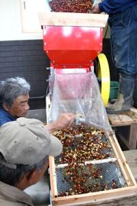 徳之島に初導入されたコーヒーの実を果実と種子に分離する電動タイプのパルパー=22日、伊仙町伊仙