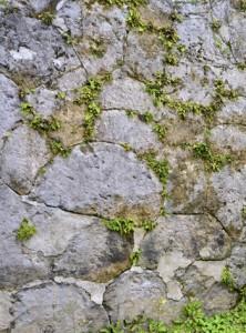 扇状や多角形のサンゴ石がかみ合うように組まれた石垣=11日、同町秋名