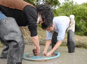 泥染めを体験する和歌山県の紀州漆器協同組合青年部メンバー=23日、龍郷町大勝