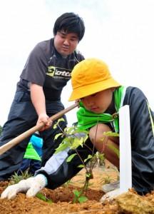 ヒカンザクラなどの苗木を植樹する参加者=27日、知名町