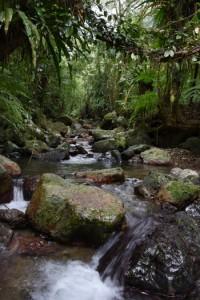 希少な動植物が生息・生育する一方、その盗掘・捕獲防止対策の強化が求められる奄美大島の森