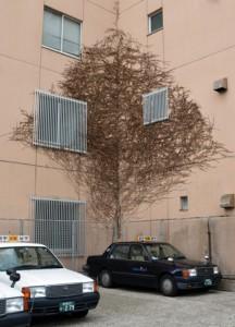 立ち木のような模様に伸びたビルの壁をはうツタ=奄美市名瀬
