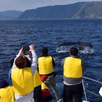 ホエールウオッチングを楽しむツアー参加者=2019年1月、奄美大島近