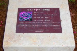 神戸市に設置された震災復興祈念緋寒桜の碑=2月23日、神戸市(提供写真)