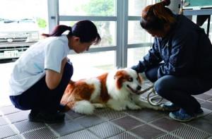 ペットの様子を聞き取りながらアドバイスをする伊藤獣医師(左)=12日、喜界町中央公民館
