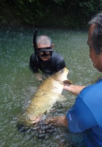 住用川で捕獲された外来種のコイ