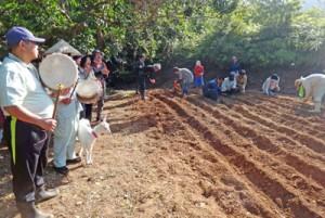 田植え唄に合わせ、陸稲の種をまいた「陸稲祭」(提供写真)