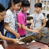 奄美の動物たちの剥製を触って感触を確かめる受講生=18日、瀬戸内町立図書館・郷土館