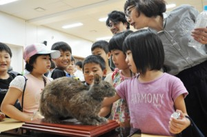 アマミノクロウサギの剥製に触れてる子どもたち=18日、龍郷町