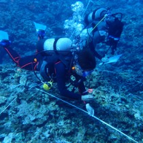 ダイビング事業者ら21人が参加したヨロン島リーフチェック=5月25日、与論島の茶花沖(海の再生ネットワークよろん提供)