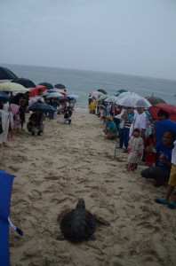 雨が降る中、アカウミガメの旅立ちを見守る親子連れ=9日、奄美市名瀬の大浜海浜公園
