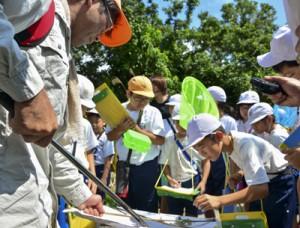 西さん(左)の説明を聞き、昆虫を観察する児童たち=12日、奄美市名瀬小湊