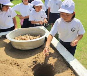 ウミガメの卵をふ化場に移す児童=6月6日、奄美市笠利町(提供写真)