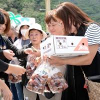 旬の果実を買い求める来場者でにぎわった「すももフェスタ」=16日、大和村