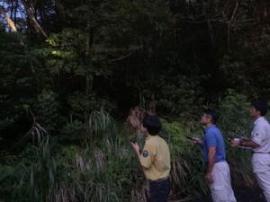 宇検村の林道で盗掘防止パトロールをする環境省の職員ら=24日、宇検村(環境省提供)