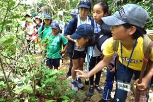 森の中を散策し、希少な動植物について学んだ現地視察3日目=日、沖縄県西表島
