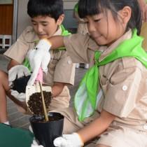 メヒルギの苗を作る児童たち=4日、田検小