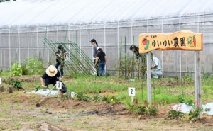 本年度から開設された天城町市民農園「ゆいゆい農園」=6日、同町瀬滝