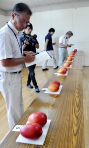 14点の出品があった沖永良部島のマンゴー品評会=30日、和泊町