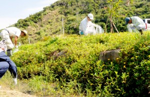 と奄美大島で行われた駆除作業=2017年6月、瀬戸内町