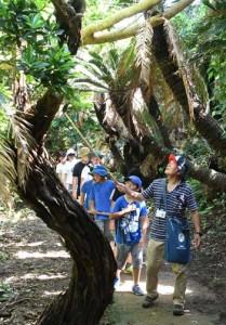 ソテツトンネルを歩き、島の自然に触れる参加者ら=5日、徳之島町金見