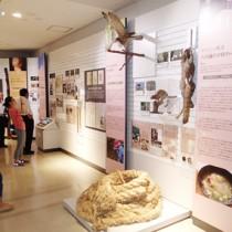 月ごとの行事や自然を紹介した3階展示室=24日、奄美市名瀬