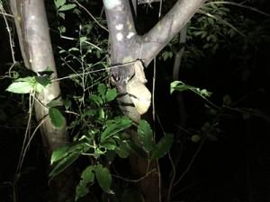 発見された昆虫トラップ=13日、瀬戸内町(環境省奄美群島国立公園管理事務所提供)
