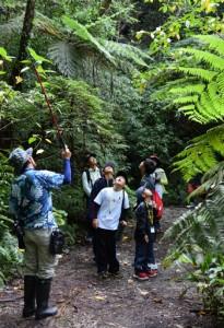 金作原国有林を散策して自然の魅力を体感した子どもたち=28日、奄美市名瀬