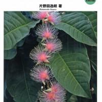 「琉球弧・植物図鑑 from AMAMI」