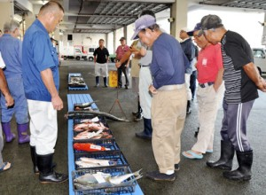 台風通過後、初の競りが開かれた名瀬漁協=17日、奄美市