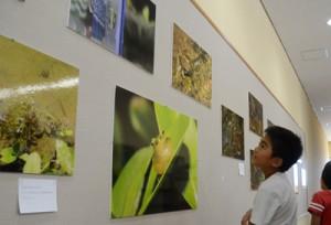 カエルの写真を鑑賞する児童=1日、奄美市名瀬
