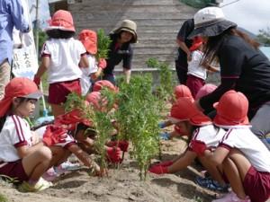 県から提供された花の苗を植える園児ら(提供写真)